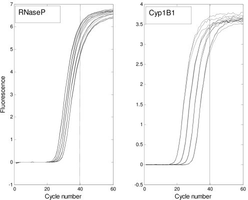 PCR results for RNaseP and Cyp1B1, showing replicates. Observations from the RNaseP and Cyp1B1 data sets are shown in linear scale, with the 40 cycle cutoff marked by the vertical line. The horizontal axes show cycle number.