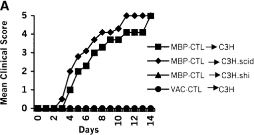 MBP-specific CTLs isolated from C3H wild-type mice transfer CNS autoimmunity. (A) Mean clinical score of recipient mice after transfer of MBP–CTL or Vaccinia-specific CTLs (VAC–CTL) into C3H, C3H.scid, or C3H.shi recipient mice. (B) MBP–CTLs induced severe weight loss in recipient mice expressing endogenous MBP. The mean clinical score and weight loss is the average of three independent experiments using the same T cell clone. Of two independent T cell clones studied, both induced similar CNS disease. Incidence of disease after transfer of MBP–CTLs into recipient mice was 17/19 in C3H, 12/13 in C3H.scid, 0/15 in C3H.shi, and 0/14 after transfer of VAC–CTLs into C3H.