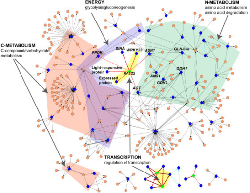 A metabolic and regulatory sub-network created from the 216 misregulated genes in cli186. This is a sub-network of the 216 misregulated genes that was extracted from the larger multinetwork created using the 966 L/C regulated genes in WT [see Additional file 5] and visualized using Cytoscape [54]. Nodes representing genes (blue hexagons), genes annotated to be transcription factors (green diamonds) or metabolites (peach circles) are connected via edges. The type of edge indicates if the interaction is metabolic (grey arrows), protein-DNA regulation (red arrows) or protein-protein (blue dashed lines). Protein-DNA interactions are supported by the presence of one or more binding sites within the promoter of that gene for that particular transcription factor (see Methods). This is a connected network comprised of 60/216 misregulated genes in cli186 in which all of the nodes represented are misregulated in cli186.