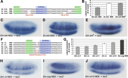 Precise Changes in NEE Organization Determine Lineage-Specific Threshold Readouts of Morphogen Gradient(A–E) Minimal modification of the D. melanogaster brk NEE configuration so that it resembles the D. virilis spacing (A) is sufficient to expand expression to levels seen for the D. virilis brk NEE-driven transgene (B–E). Asterisk (*) indicates that the spacing has been mutated in an otherwise wild-type D. melanogaster brk NEE.(F–J) A series of minimal modifications to the D. melanogaster vein (vn) NEE configuration (F) so that it differs by −1 bp, 0 bp (wild-type), +1 bp, and +2 bp, which is similar to the broadly expressed D. melanogaster sog NEE configuration, yields a series of monotonically increasing widths for lateral stripes of expression (G–J). The in situ staining experiments in this figure were conducted in parallel and with the same anti-sense lacZ probe to facilitate comparisons.