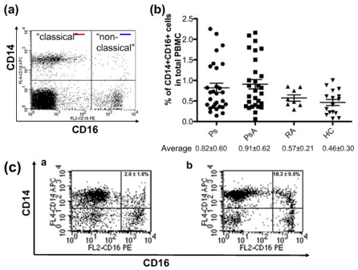 Ps and PsA patients have a higher percentage of CD14+CD16+ cells. Human peripheral blood mononuclear cells (PBMC) were isolated from peripheral blood, stained with an antibody cocktail composed of CD14-APC, CD16-PE, 7AAD, and analyzed by flow cytometry. Dead cells were excluded by 7AAD+. (a) Classical (CD14+CD16-, red line) and non-classical (CD14+CD16+, blue line) monocytes were labeled based on the classification by Strauss-Ayali and colleagues [5]. (b) The percentage of CD14+CD16+ cells in the PBMC of 16 healthy controls (HC), and 29 psoriasis (Ps), 28 psoriatic arthritis (PsA), and 8 rheumatoid arthritis (RA) patients. (c) The percentage of CD14+CD16+ cells in enriched human monocytes from HC and PsA. Monocytes were enriched by the Human Monocyte Enrichment Cocktail. The percentage of CD14+CD16+ cells in enriched monocytes from HC (2.6 ± 1.6%) and PsA patients (10.3 ± 9.5%) are shown in [a] and [b], respectively. The data are representative of 10 independent experiments.