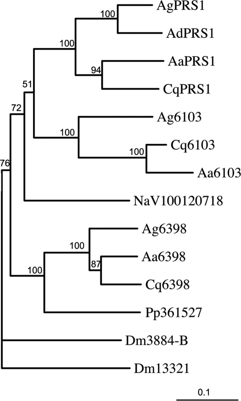 Partial phylogenetic tree of the DM9-protein family.DM9 proteins whose genes are located on chromosome 2 in An. gambiae were used for a blast search and the sequences of their closest homologues from different species: Ag, An. gambiae; Ad, An. darlingi; Cq, Culex quinquefasciatus; Aa, A. aegypti; Pp, Phlebotomus papatasi; NaV, Nasonnia vitripennis were aligned, together with two DM9 proteins from Drosophila (Dm: D. melanogaster). The sequence alignment was used to generate an unrooted tree Bootstrap values on 100 replicates are given. The scale bar represents 10% differences in protein sequences. The sequence alignment used to build the tree is shown in Figure S1, a more complete phylogenetic tree is provided in Figure S2 and a list of DM9 proteins with accession numbers is given in Table S1.