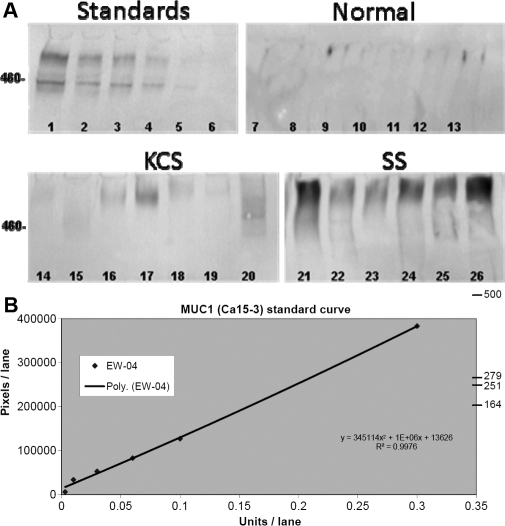 Western blot and regression analysis for soluble MUC1 quantification A: Examples of Soluble MUC1 western blots from tear samples derived from Normal, KCS, and SS and subjects. Lanes 1–6 are MUC1 standard antigen (CA15–3) Units; (Lane 1=0.3, Lane 2=0.1, Lane 3=0.06, Lane 4=0.03, Lane 5=0.01, Lane 6=0.003 U); Lanes 7–13 are examples of tear samples from Normal, Lanes 14–20 are from KCS, and Lanes 21–26 are from SS. B: A regression curve was created by graphing applied concentration of CA15–3 standard against the optical density of the resulting band immunoreactivity. Total MUC1 concentration was quantified by interpolation from this curve. MW standard (460) is listed on the left.