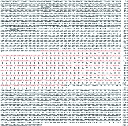 Nucleotide and deduced amino acid sequences of PxGSTe gene from Plutella xylostella. Putative TATA boxes are underlined. The asterisk indicates the translational termination codon. The coding sequences are shown by red. Nucleotides in lower case letters are intron sequences.