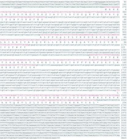 Nucleotide and deduced amino acid sequences of PxGSTs gene from Plutella xylostella. Putative TATA boxes are underlined. The asterisk indicates the translational termination codon. The coding sequences are shown in red. Nucleotides in lower case letters are intron sequences.