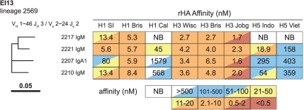 Clonal lineage 2569 from EI13.Three of 4 members (75%) derived from IgM-expressing plasma cells, 1/4 (25%) derived from an IgA1 plasma cell. The highest affinity binding for all members was to H3 Jobg; high affinity binding to other H3 rHAs and H1 Bris was also observed. Three members were tested for HAI and neutralization and displayed similar breadth (Table 3). H1 SI = H1N1 A/Solomon Islands/03/2006; H1 Bris = H1N1 A/Brisbane/59/2007; H1 Cal = H1N1 A/California/04/2009; H3 Wisc = H3N2 A/Wisconsin/67/2005; H3 Bris = H3N2 A/Brisbane/10/2007; H3 Jobg = H3N2 A/Johannesburg/33/1994; H5 Indo = H5N1 A/Indonesia/05/2005; H5 Viet = H5N1 A/Vietnam/1203/2004.