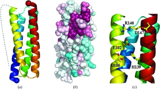 (a) Schematic view of the structure of PA2169, a protein of unknown function. The dotted line indicates the flexible loop that is not well defined in electron density. (b) Surface representation of PA2169 with residues colour-coded according to sequence conservation from white (not conserved) to cyan (invariant). (c) View of the potential metal-binding site in PA2169 comprising residues Glu102, Asp106 and His139.