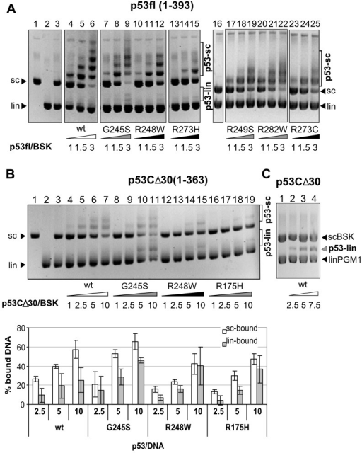 Only Full Length Mutp53 Proteins Exhibit Strong SCS-bin