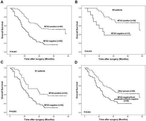 Survival curves of patients according to expression statues of MTA3.(A) The OS was significantly better among the patients with MTA3-positive tumors than among the patients with MTA3-negative tumors (P<0.001). (B) Among the patients with no lymph node metastasis (N0), the OS was significantly better in the patients with MTA3-positive tumors than in the patients with MTA3-negative tumors (P = 0.018). (C) Among the patients with lymph node metastasis (N1), the OS was significantly better in the patients with MTA3-positive tumors than in the patients with MTA3-negative tumors (P = 0.003). (D) The OS among the patients with MTA3-negative/Snail-positive/E-cadherin-negative tumors was significantly worse than among the patients whose had tumors exhibited other expression patterns (P = 0.003).
