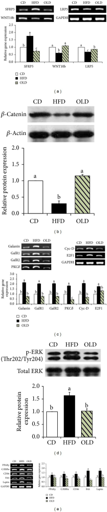 Effects of OLE on genes regulating adipogenesis in the epididymal adipose tissue of HFD-fed mice. (a) Gene expression of SFRP5, WNT10b, and LRP5, (b) protein levels of β-catenin, (c) mRNA expression of genes involved in the galanin-mediated signaling pathway, (d) protein levels of p-ERK and total ERK, (e) expression of PPARγ2, C/EBPα, and their target genes. Reverse transcriptase-polymerase chain reaction (RT-PCR) data represent the relative density normalized to that of glyceraldehyde-3-phosphate dehydrogenase (GAPDH). Protein levels were normalized to the β-actin level. Data represent the results of three independent experiments (n = 2 or 3 per experiment); P < 0.05 indicates statistical significance. Values are the means ± SEM, n = 8 for each group.