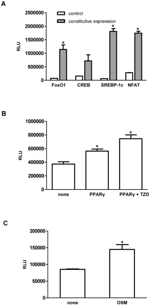 Validation of TF reporter constructs.(A) Foxo1, CREB, SREBP-1c, and NFAT3 reporter plasmids were validated by co-transfecting plasmids for constitutive expression of each TFs (pCMV5-FLAG-FoxO1, pCMV-Sport6-CREB, pSV Sport SREBP-1c, pEGFP-C1 NFAT3) and corresponding reporter plasmids into 293T/17 cells, and monitoring the TF-mediated Gaussia luciferase (Gluc) activity. A yellow fluorescence protein expressing plasmid (pEYFP-N1) plasmid was co-transfected with each reporter plasmid as a control. (B) The PPARγ reporter construct was verified by transfecting a plasmid containing the PPARγ gene was into 3T3-L1 PPARγ reporter cells, and activating PPARγ with 25 µM of rosiglitazone (RGZ). (C) The C/EBPβ reporter construct was validated by activating C/EBPβ in 3T3-L1 preadipocyte C/EBPβ reporter cells with the cytokine oncostatin M (OSM). Data represent mean ± SD. *: p<0.05.