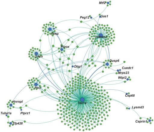 SOX3 is implicated in an interchromosomal regulatory network.Graphical representation of potential long range intra- and interchromosomal interactions as identified by overlap of SOX3 peaks with RNAPII ChIA-PET peaks. Blue circles are sites present in both SOX3 and RNAPII datasets, while green circles are the linked genomic regions present only in the RNAPII dataset. The nearest TSS is labelled for the common binding sites.