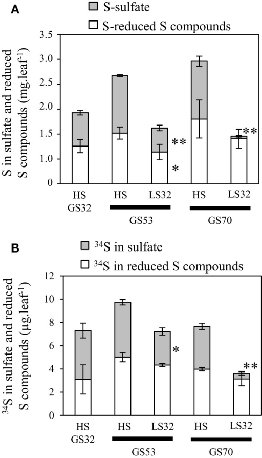 Changes in S (A) and 34S (B) amount determined in the sulfate and reduced S-compounds fractions in source leaves of oilseed rape subjected to limitation of sulfate at the bolting stage. S limitation (LS32 plants supplied with 8.7 μM sulfate) was compared to control plants (HS plants supplied with 508.7 μM sulfate) between GS32 (bolting stage), GS53 (early flowering) and GS70 (start of pod filling). Significant differences between treatments are indicated with asterisks (n = 4; *P < 0.05; **P < 0.01).