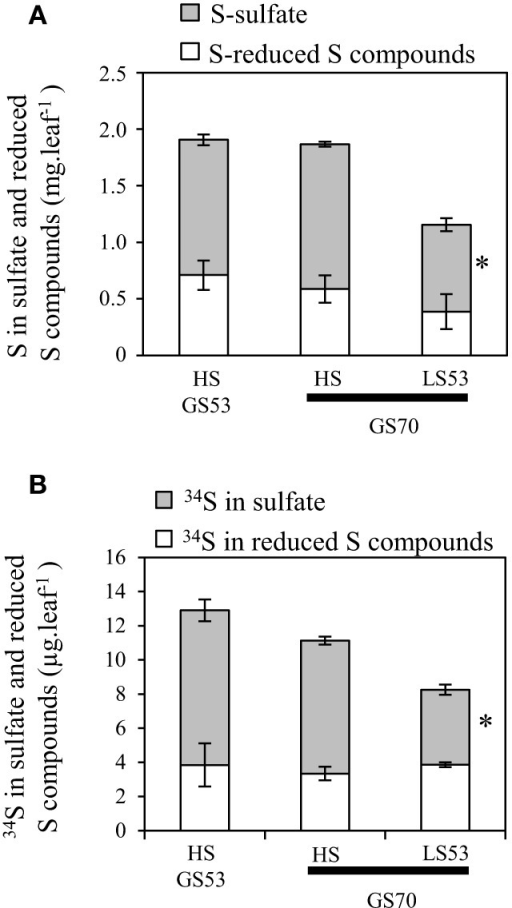 Changes in S (A) and 34S (B) amounts determined in the sulfate and reduced S-compounds fractions in source leaves of oilseed rape subjected to limitation of sulfate at the early flowering stage. S limitation (LS53 plants supplied with 8.7 μM sulfate) was compared to control plants (HS plants supplied with 508.7 μM sulfate) between GS53 (early flowering) and GS70 (start of pod filling). Significant differences between treatments are indicated with asterisks (n = 4; *P < 0.05; **P < 0.01).