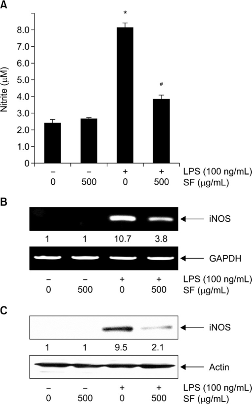 Inhibition of nitric oxide (NO) production by Schisandrae Fructus ethanol extract (SF) in lipopolysaccharide (LPS)-stimulated RAW 264.7 macrophages. Cells were pretreated with 500 μg/mL SF for 1 hour before incubation with LPS (100 ng/mL) for 24 hours. (A) Nitrite content was measured using the Griess reaction in culture media using a commercial enzyme-linked immunospecific assay kit. Each value indicates the mean ± standard deviation and is representative of results obtained from three independent experiments (*P < 0.05 compared with control group; #P < 0.05 compared with LPS-treated group). (B) Total RNA was isolated after a 6 hours LPS treatment and reverse-transcribed using inducible NO synthase (iNOS) primers. The resulting cDNAs were then subjected to polymerase chain reaction (PCR). The reaction products were run on 1% agarose gels and visualized by ethidium bromide staining. (C) The cells were sampled and lysed following a 24 hours treatment, and equal amounts of protein were separated by sodium dodecyl sulfatepolyacrylamide gel electrophoresis. Western blotting was performed using anti-iNOS antibody and an an enhanced chemiluminescence detection system. Glyceraldehyde-3-phosphate dehydrogenase (GAPDH) and actin were used as internal controls for the reverse transcriptase- PCR and Western blot assays, respectively. The relative amounts of iNOS protein and mRNA were normalized with GAPDH and actin, respectively.