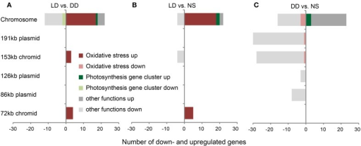 Substantial changes in gene expression of D. shibae. Genes with significant changes in expression on the chromosome and on extrachromosomal replicons (ECRs) of D. shibae when (A) LD vs. DD, (B) LD vs. NS, and (C) DD vs. NS are compared. Genes that are part of the photosynthesis gene cluster and the oxidative stress response are highlighted in green and red, respectively.