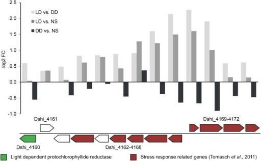 Expression of the regulated locus on the 72-kb chromid. The upper bar chart illustrates the differential expression of the regulated locus on the 72-kb chromid (Dshi_4160-4172). In the lower panel, the light dependent chlorophyllide reductase (LPOR) and genes that have been found to be part of the oxidative stress response (Tomasch et al., 2011) are highlighted in green and red colors respectively.