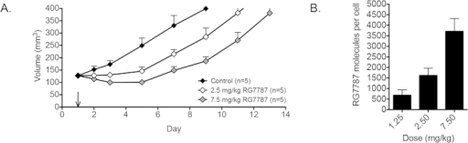 Anti-tumor activity and corresponding quantification of RG7787 molecules per cell.A. Tumor volumes of mice with KLM-1 xenografts (120-140 mm3) treated with a single dose of D-PBS 0.2% HSA (control, black), 2.5 mg/kg RG7787 (white) or 7.5 mg/kg RG7787 (gray) i.v. B. Average RG7787-Alexa Fluor 647 molecules per cell in KLM-1 tumor cell population (CD71 R-PE +) 6 hrs after treatment with 1.25 mg/kg (n = 3), 2.5 mg/kg (n = 7) or 7.5 mg/kg (n = 4) RG7787-Alexa Fluor 647 i.v.