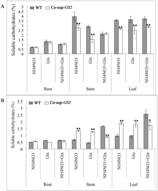 The concentration of soluble carbohydrates in the roots, stems and uppermost leaves of GS2-cosuppressed plants (Co-sup-GS2) and wild-type plants (WT) at the seedling stage (A) and the tillering stage (B) under N (NH4NO3), G (Gln) and N + G (NH4NO3 + Gln) conditions. Values are the mean ± SD from three biological replicated plant materials. *, ** Significant differences at the level of p = 0.05 and p = 0.01, respectively.