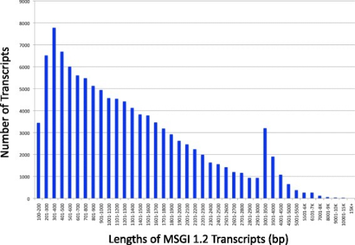 Distribution of transcript lengths in the Medicago sativa Gene Index 1.2. The de novo transcriptome was built from 76-bp single-end read sequences from three biological replicates of six tissues (roots, nodules, post-elongation stem internodes, elongating stem internodes, leaves, and flowers) isolated from Medicago sativa ssp. falcata (F56) and M. sativa ssp. sativa (B47) using Velvet/Oases, cd-HIT, and CAP3. The Medicago sativa Gene Index 1.2 (MSGI 1.2) is composed of 112,626 unique sequences ranging from 100 bp to 15,768 bp