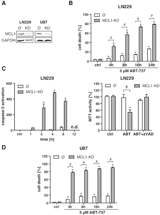 MCL1 knockdown sensitizes glioma cell lines to ABT-737–induced apoptotic cell death. Establishment of a stable lentiviral MCL1 knockdown in LN229 and U87 glioma cell lines, as determined by Western blotting (A). LN229 control cells (Ø) and MCL1-KD cells were treated with 5 μM ABT-737 in a time course experiment (4, 8, 16, and 24 hours), and cell death was quantified by FACS analysis of Annexin/PI (B). Effector caspase activation as determined by DEVD cleavage in LN229 empty vector control cells (Ø) and MCL1-KD cells after treatment for 1, 2, 4, 8, and 12 hours with 5 μM ABT-737 (C, left panel). Analysis of MTT activity in LN229 empty vector control cells (Ø) and MCL1-KD cells after treatment with 5 μM ABT-737 for 24 hours (C, right panel). Where indicated, cells were additionally treated with the pan-caspase inhibitor zVAD. U87 control cells (Ø) and MCL1-KD cells were treated with 5 μM ABT-737 in a time course experiment (4, 8, 16, and 24 hours), and cell death was quantified by FACS analysis of Annexin/PI (D). In all parts of the figure, graphs represent means of n = 4-8 cultures + SEM. *P < .05, significant difference to untreated controls; #P < .05, significant difference to respective control cell line.