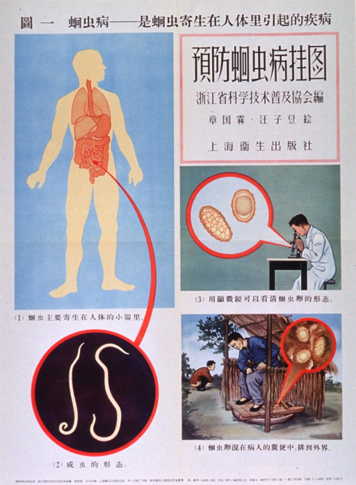 <p>Predominantly white poster with black lettering.  All lettering appears to be in Chinese characters.  Visual images are illustrations of a human silhouette with the viscera superimposed to reveal worm infestation, worms, a man viewing worm larvae through a microscope, and two men defecating--one on the ground and one into a latrine.</p>