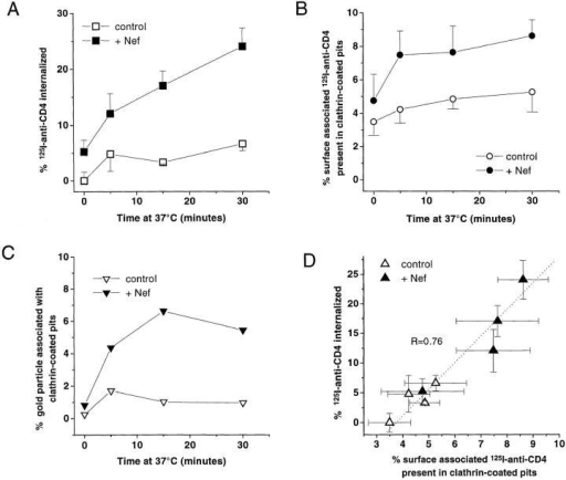 Nef-induced CD4 internalization and association with  CCP. (A) Kinetics of 125I-antibody–CD4 complex internalization  in CEM T lymphoid cells expressing or not expressing Nef. (B)  Kinetics of 125I–antibody–CD4 complex association with clathrin-coated structures in CEM T lymphoid cells expressing or not expressing Nef. (C) Kinetics of CD4–gold complex association with  clathrin-coated structures in CEM T lymphoid cells expressing or  not expressing Nef. (D) CD4 internalization as a function of CD4  association with CCP in EM autoradiography. The relationship  between CD4 internalization and CD4 association with CCP, in  cells expressing or not expressing Nef, were fitted by a linear regression (R = 0.76). Cells were incubated 2 h at 4°C with 125I– anti-CD4 antibody (or a primary anti-CD4 antibody followed by  a secondary gold–conjugated antibody), and endocytosis of the  radiolabeled antibody–CD4 complex (or CD4–immunogold complex) was allowed to occur by raising the temperature to 37°C for  different periods of time. After cell processing for EM autoradiography or gold detection, quantification was carried out as described previously (Salpeter et al., 1977; Carpentier et al., 1978,  1981, 1991, 1992; Fan et al., 1982). As control, cells harboring an  empty plasmid were used. For each time point studied and for  each cell line, ∼950–1,150 autoradiographic grains (or 700–2,250  gold particles) were analyzed from cells judged to be morphologically well preserved. Autoradiographic grains within a distance  of ±250 nm from the plasma membrane were considered associated with the cell surface; grains overlying the cytoplasm and  >250 nm from the plasma membrane were considered internalized. Grains associated with the plasma membrane were considered associated with CCP if their centers were <250 nm from  these surface domains. Gold particles were considered associated  with clathrin-coated structures when they were observed immediately adjacent (at a distance <20 nm) to the clathrin coat or totally enclosed in clathrin-coated pits/vesicles. Data are mean ±  SEM of three experiments.