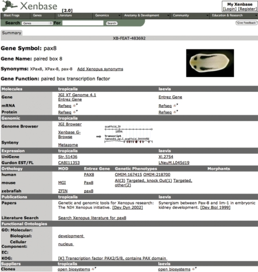 Xenbase gene page screenshot. A screenshot of the display generated by a search for 'pax8'. Xenopus tropicalis is arranged on the left when species-specific data is displayed and X. laevis-specific data in the right column. Data common to the both species is not restricted to this format and is presented throughout the corresponding row.
