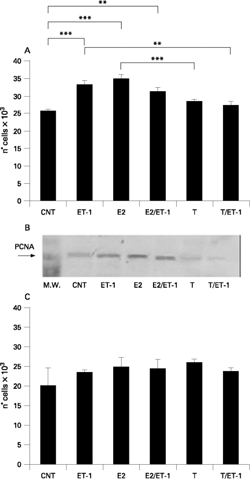 A. Evaluation by 3-(4,5-dDimethylthiazol-2-yl)-2,5-diphenyltetrazolium bromide (MTT) test of cell proliferation in human normal fibroblasts (Fb) untreated (control) and treated for 24 h with endothelin-1 (ET-1) (10−7 M), 17β-oestradiol (E2) (10−10 M), E2 (10−10 M) with ET-1 (10−7 M), testosterone (T) (10−9 M) or T (10−9 M) with ET-1 (10−7 M). **p<0.01; ***p<0.001. B. Evaluation by western blot analysis of proliferating cell nuclear antigen (PCNA) expression in human normal Fb untreated (control) and treated for 24 h with ET-1 (10−7 M), E2 (10−10 M), E2 (10−10 M) with ET-1 (10−7 M), T (10−9 M) or T (10−9 M) with ET-1 (10−7 M). C. Evaluation by MTT test of cell proliferation in human systemic sclerosis fibroblasts (SSc Fb) untreated (control) and treated for 24 h with ET-1 (10−7 M), E2 (10−10 M), E2 (10−10 M) with ET-1 (10−7 M), T (10−9 M) or T (10−9 M) with ET-1 (10−7 M).