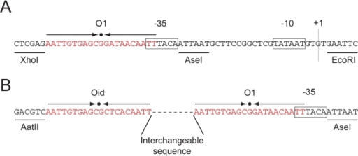 Promoter regions of the different short loop constructs.(A) Promoter region of pZS25-YFP which has a variant of the lacUV5 promoter and an  operator upstream overlapping the −35 region. (B) Final construct that allows to insert arbitrary DNA sequences between a  and  operators.