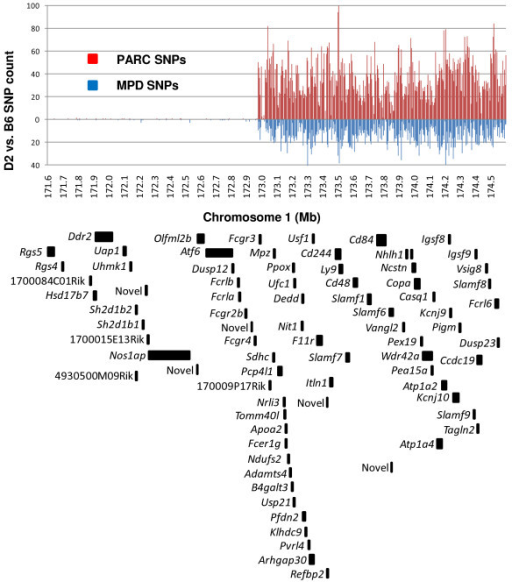 Density of PARC SNPs and protein coding genes. B6 vs. D2 PARC SNPs are binned in 5000 bp intervals. The blue lines indicate how many SNPs are currently annotated in the public MPD database, and the red lines show how many PARC SNPs were discovered by custom HTS with realignment of this 3 Mb interval of chromosome 1. SNP dense and SNP sparse regions are apparent. A total of only 16 SNPs were detected between 171.6 – 172.9 Mb, whereas 11,808 SNPs were detected between 172.9 – 174.6 Mb. Below, the black blocks identify the locations of the 79 protein coding genes annotated by Ensembl in this interval.