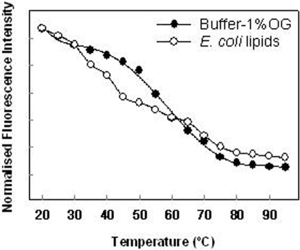 Fluorescence intensity at the maximum of the emission spectra as a function of temperature.The protein reconstituted in detergent micelles show one principal transitions in comparison with the protein reconstituted in lipid membranes where at least three different transitions can be observed. Fluorescence intensity values are normalized to the higher intensity value observed with the protein in micelles suspension at 20°C.