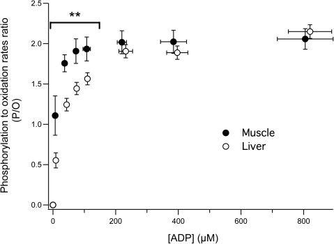 Changes in the P/O ratio as a function of ADP concentration in liver and muscle mitochondria.P/O ratio was determined by calculating the phosphorylation to oxidation rates ratio. Data for liver (n = 4) and muscle (n = 5) are presented as mean ± SD. Differences were tested using an unpaired bilateral student's t-test. ** p<0.01 between liver and muscle.