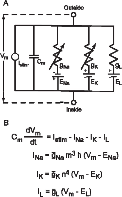Equivalent electric circuit for HH model. A: Hodgkin an