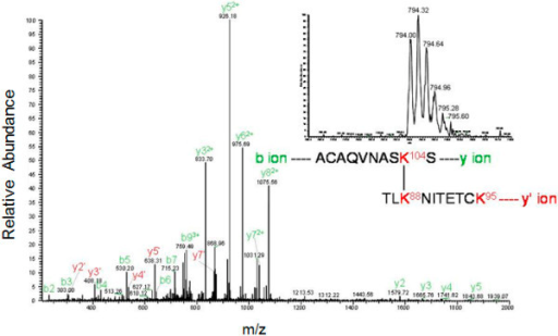 LC-MS/MS peptide map profile of N-terminal domain of Mo-MLV integrase monomer crosslinked gel band. Samples were digested overnight at 37°C with 0.8 μg of trypsin. The image shows the ionization and sequence of the LC peak (indicated in the inset) corresponding at the intramolecular peptide 96–105 and 86–95 with K88 and K104 modified.