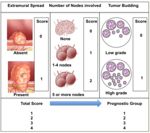 The Jass Classification (Ueno et al., 2004 [17]): not in order Tumor is scored in three areas; extramural spread, positive nodes and tumor budding. The total score place it in a prognostic group.
