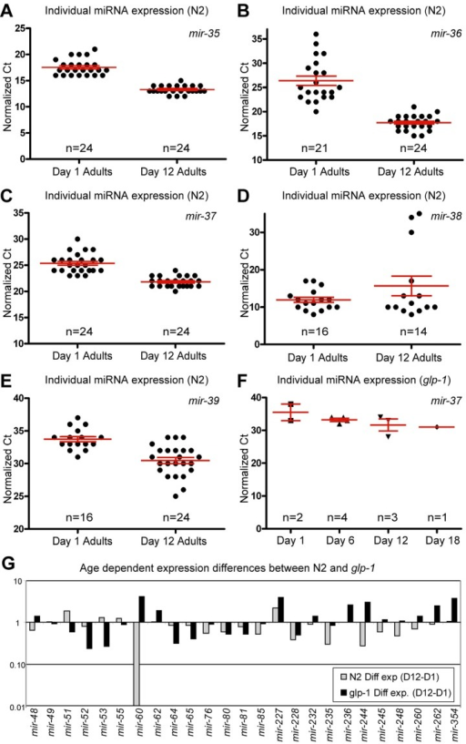 Presence of the germline alters miRNA abundance(A-F) Normalized Ct values demonstrating that miRNA expression from the mir-35-41 cluster is dramatically different in N2 animals with age but is virtually absent, at all ages examined, in glp-1 germline-less animals. In N2 animals, mir-35 (A), mir-36 (B) and mir-37 (C) are expressed at much higher levels in old animals, while mir-38 (D) has a median value that is higher in aged animals. mir-39 (E) is also dramatically higher in aged animals. In glp-1 mutants only mir-37 (F) was detected, and its levels were much lower than in wild type animals. (G) Graphical representation of the difference between miRNA abundance in old and young worms, for both wild type and germline-less mutants. The values graphed are the average values at the old age minus the averaged values at the young age for each of the two genotypes with log2 transformation to describe the fold change (i.e. 2^-(average Ct old - average Ct young)). In all graphs with error bars they indicate the standard error of the mean. In individual worm graphs each point is the average from 2-3 technical replicates.
