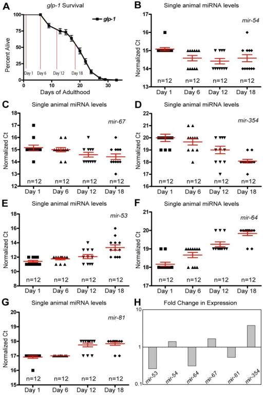 Dynamic changes of miRNAs with age in long-lived germline ablated animals(A) Survivorship of a population of N2 (wild type) animals, from which individuals were harvested for analysis at Day 1, Day 6, Day 12 and Day 18 of adulthood. (B-G) miRNA levels in individual worms (columns) at four time points are shown for mir-54 (B), mir-67 (C), mir-354 (D), mir-53 (E), mir-64 (F), and mir-81 (G). (H) Graphical representation of the fold change in miRNA abundance between young and old animals using averaged values. In all graphs with error bars they indicate the standard error of the mean. In individual worm graphs, each point is the average from 2-3 technical replicates.