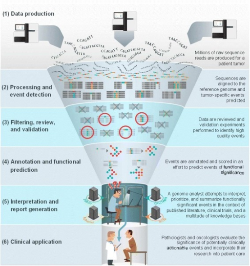 The interpretation bottleneck of personalized medicine. A typical cancer genomics workflow, from sequence to report, is illustrated. The upstream, relatively automated steps (shown by their light color here) involve (1) the production of millions of short sequence reads from a tumor sample; (2) alignment to the reference genome and application of event detection algorithms; (3) filtering, manual review and validation to identify high-quality events; and (4) annotation of events and application of functional prediction algorithms. These steps culminate in (5) the production of dozens to thousands of potential tumor-driving events that must be interpreted by a skilled analyst and synthesized in a report. Each event must be researched in the context of current literature (PubMed), drug-gene interaction databases (DGIdb), relevant clinical trials (ClinTrials) and known clinical actionability from sources such as My Cancer Genome (MCG). In our opinion, this attempt to infer clinical actionability represents the most severe bottleneck of the process. The analyst must find their way through the dark by extensive manual curation before handing off (6) a report for clinical evaluation and application by medical professionals.
