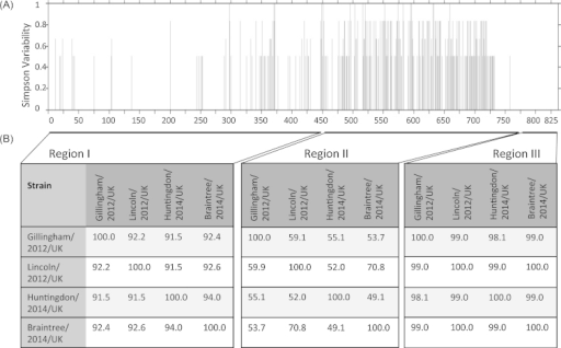 Alignment and variability analysis of capsid amino acid sequences of the four CaAstV strains identified in the UK. (A) CaAstV capsid amino acid sequences were aligned using ClustalW2, then a variability scan was constructed using the Simpson diversity index and Protein Variability Server software (Garcia-Boronat et al., 2008). (B) Amino acid percentage identity between CaAstV strains in three different regions of the capsid protein.