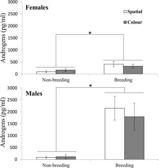 Plasma androgen concentrations in female and male cowbirds between breeding conditions and performance of spatial and colour tasks.Means are presented with ± SE. Asterisks indicate p ≤ 0.05.