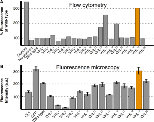 Analysis of VHL Mutant Stability by Flow Cytometry and Fluorescence Microscopy(A) Fluorescence measurements by quantitative flow cytometry for all experimentally created VHL mutations and normalized to fluorescence of the wild-type sequence. The orange entry indicates the most stable mutant, VHL19 (L201-E173), in both panels.(B) Selected mutants were also introduced to S. cerevisiae cells and expressed endogenously as a GFP fusion construct, and observed directly by fluorescence microscopy with results normalized to GFP levels without VHL. Error bars for all sections represent SE. See also degradation curves in Figure S1. a.u., arbitrary units.