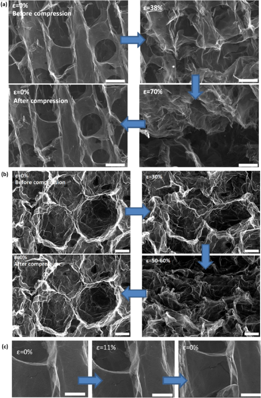 In situ high-resolution SEM images showing the microstructural change at different strain levels during the deformation for rGO-PNs with (a) lamellar structure and (b) cellular structure. Scale bar: 20 μm. (c) Evolution of a pre-exist defect during deformation. Scale bar: 10 μm.