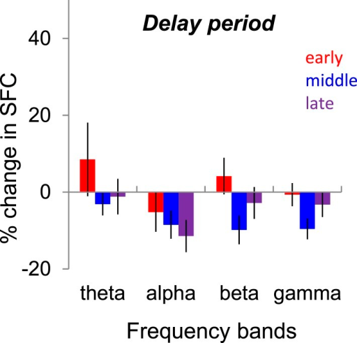 Changes in spike-LFP coherence (SFC, spike-field coherence) during the delay period.Median change in SFC (blocks 2–4 vs block 1) during the delay period for each frequency band. The 1000-ms delay period was divided into three 333-ms windows referred as early, middle, and late. *** denotes p < 0.001; ** denotes p < 0.01.DOI:http://dx.doi.org/10.7554/eLife.08417.008