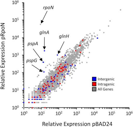 Genome-wide σ54-dependent changes in gene expression.Relative RNA levels, determined by RNA-seq, for all genes in cells transiently overexpressing rpoN (MG1655 ΔrpoN + pRpoN; RPB149) or control cells containing empty vector (MG1655 ΔrpoN + pBAD24; RPB152). Relative RNA levels were calculated using Rockhopper [65]. Each gene is indicated by a grey data point. Genes immediately downstream of intergenic σ54 sites (blue), or genes containing intragenic σ54 sites (red) are highlighted.