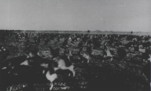 <p>Close-up of huge numbers of rabbits running across a flat plain.</p>