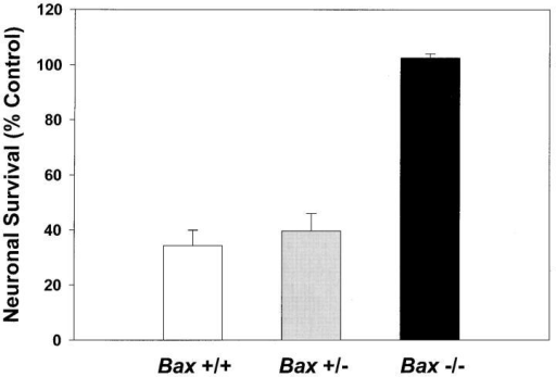 Inhibition of PI-3-K does not induce apoptosis in Bax  −/− granule cells. After 7 d in vitro, granule cells were switched  to K25+S medium in the presence of 30 μM LY 294002, an inhibitor of PI-3-K. Control cells were switched to K25+S medium.  Survival was determined by counting neurons in photomicrographs of calcein AM–stained cultures 48 h after treatment. Data  represent mean ± range for two independent experiments.