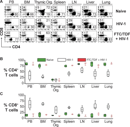 Systemic CD4+ T Cell Loss Resulting from Intravaginal HIV-1 Infection in Humanized BLT Mice(A) Comparison of the levels of CD4+ or CD8+ human T cells in the indicated tissues in representative BLT mice that were either naive, HIV-1 infected, or that received FTC/TDF for pre-exposure prophylaxis prior to exposure to HIV-1. Note the HIV-1 induced reduction in the double-positive CD4+CD8+ thymocytes.(B and C) Box plots depicting the levels of CD4+ (B) or CD8+ (C) T cells in the indicated tissues for naive (green), HIV-1 infected (white), and FTC/TDF-treated plus HIV-1–exposed (red) BLT mice. In these plots, the boxes extend from the first to the third quartiles, enclosing the middle 50% of the data. The middle line within each box indicates the median of the data, whereas the vertical line extends from lowest to the highest values. Data from naive, HIV-1-, or FTC/TDF-treated plus HIV-1–exposed mice were not collected on the same day. Naive (n = 5), HIV-1 infected (n = 4), and FTC/TDF + HIV-1 (n = 3). Flow cytometry gating for this figure was performed as described for Figure 2.BM, bone marrow; LN, lymph node; PB, peripheral blood; Thymic Org., implanted thymic organoid.