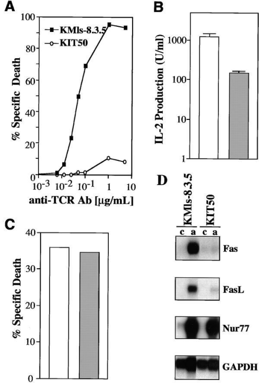 Isolation and characterization of a T cell hybridoma mutant  with impaired Fas and FasL expression. (A) The T cell hybridoma mutant  KIT50 is resistant to anti-TCR Ab (H57-597). Cells were incubated for  24 h on 96-well plates coated with increasing amounts of H57-597 and  then assayed for apoptosis by PI uptake and FACS® analysis. Specific cell  death was determined as described in Materials and Methods. (Squares)  The parental cell line, KMls-8.3.5; (circles) the mutant cell line, KIT50.  The representative results of at least 10 independent experiments are  shown. (B) IL-2 production upon TCR stimulation. Cells were stimulated for 18 h on plates coated with anti-TCR Ab (10 μg/ml). Supernatants were collected and their activity was assayed using HT-2 cells as previously described (23). (White bar) The parental cell line, KMls-8.3.5;  (hatched bar) the mutant cell line, KIT50. The representative results of  three to seven independent experiments are shown. (C) Apoptotic cell  death induced by dexamethasone. KMls-8.3.5 and KIT50 cells were incubated in the presence of 10 μM dexamethasone or in the media alone  for 24 h and cell viability was tested by PI uptake. Spontaneous cell death  in the media alone was <2–3%. (White bar) the parental cell line, KMls-8.3.5; (hatched bar) the mutant cell line, KIT50. The representative results  of at least six independent experiments are shown. (D) Fas and FasL  mRNA expression was impaired in KIT50. RNA was prepared from  control or TCR-stimulated cells and then the expression of various genes  was tested by Northern blot hybridization. (c) Control, unstimulated, (a)  stimulated with anti-TCR Ab (10 μg/ml).