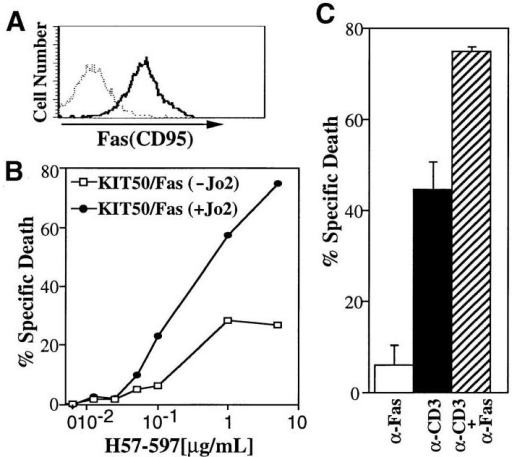 TCR-mediated signals enhance Fas-mediated apoptosis. (A)  KIT50/Fas expresses relatively high levels of Fas on the cell surface. Surface Fas expression on KIT50-Fas cells were determined by FACS® analysis using biotinylated Jo2 Ab (PharMingen) and phycoerythrin (PE)- labeled streptavidin (Becton Dickinson). (Dotted line) PE-streptavidin  alone; (solid line) biotinylated Jo2 plus PE-streptavidin. (B) TCR stimulation enhances Fas-mediated cell death. KIT50-Fas cells were cultured in  96-well plates coated with increasing amounts of H57-597 ± anti-Fas Ab  (Jo2, 10 μg/ml). Cells were collected after 24 h and cell death was detected by PI uptake by FACS® analysis. The representative results of at  least three independent experiments are shown. (Filled circles) KIT50/Fas  stimulated with anti-Fas and anti-TCR Abs; (white squares) KIT50/Fas  stimulated with anti-TCR Ab alone. (C) Synergistic effect of simultaneous Fas and TCR stimulation on activated lymph node T cells. ConA-IL-2–activated LNTC were incubated on plates coated with anti-CD3  (10 μg/ml) and/or anti-Fas Abs (10 μg/ml). Cell death was determined  48 h later by PI uptake. The representative results of three independent  experiments are shown. Spontaneous cell death in the media alone was  <5%. These experiments were done in the absence of cycloheximide.  (White bar) anti-Fas Ab alone; (black bar) anti-CD3 Ab alone; (hatched bar)  anti-Fas Ab plus anti-CD3 Ab.